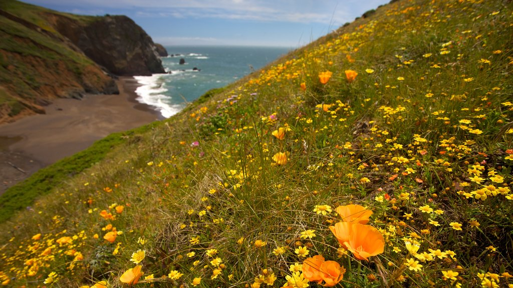 San Francisco which includes flowers, tranquil scenes and wildflowers