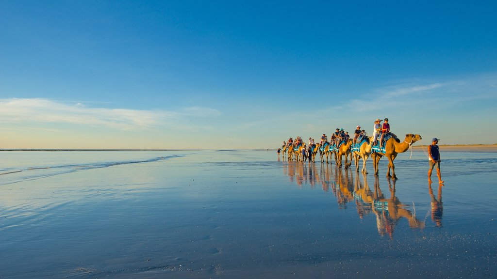 Cable Beach featuring a sandy beach and land animals