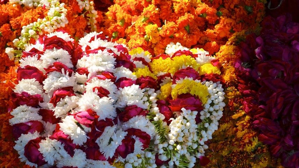 Jaipur featuring flowers