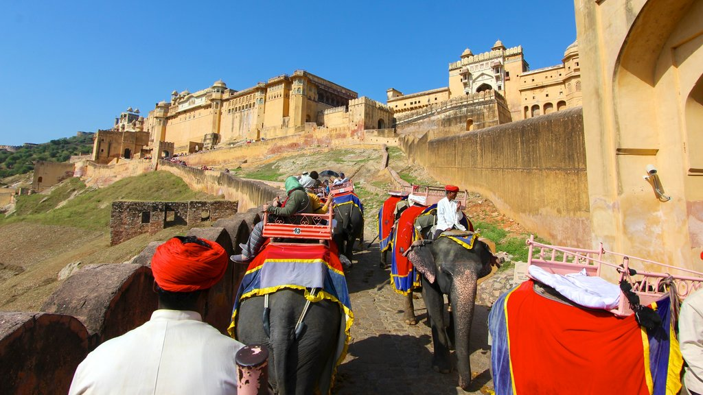 Amber Fort showing a castle, land animals and heritage architecture