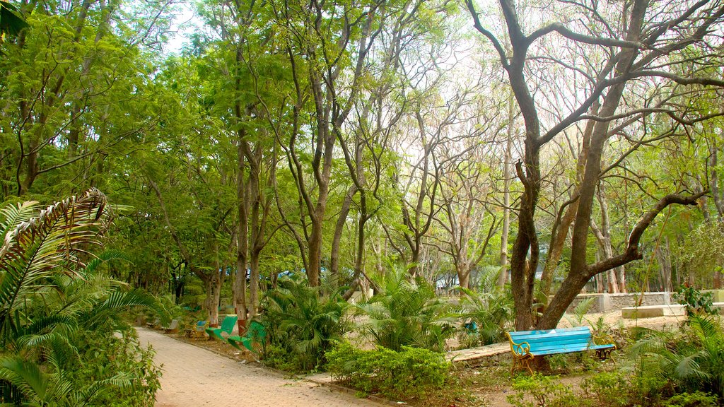 Pune showing a park