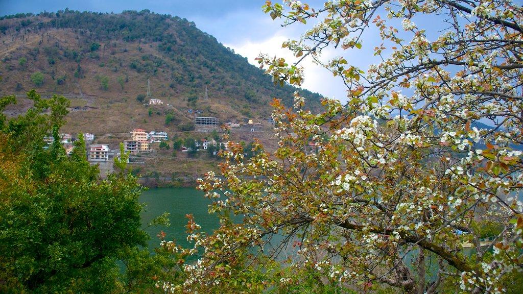 Bhimtal showing flowers, general coastal views and landscape views
