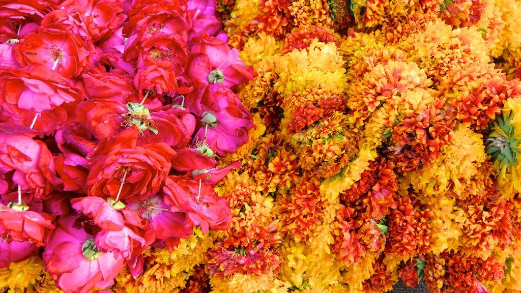 Johri Bazaar which includes flowers