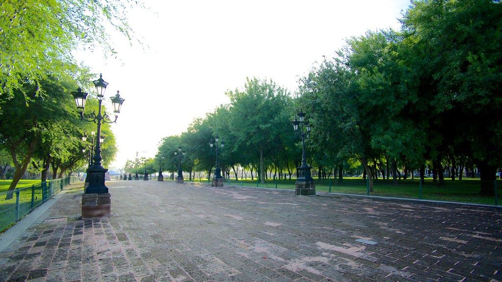 Monterrey showing a park