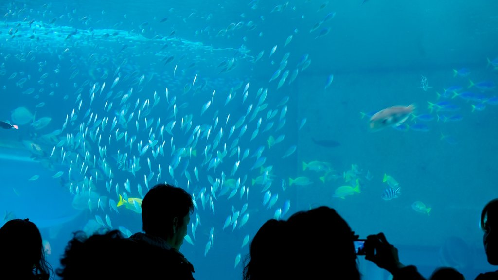 Okinawa Churaumi Aquarium featuring marine life and interior views as well as a small group of people