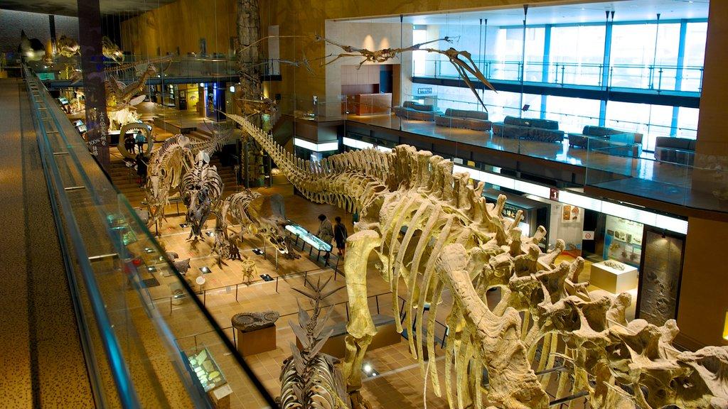 Museo de Historia Natural y Humana que incluye vistas interiores