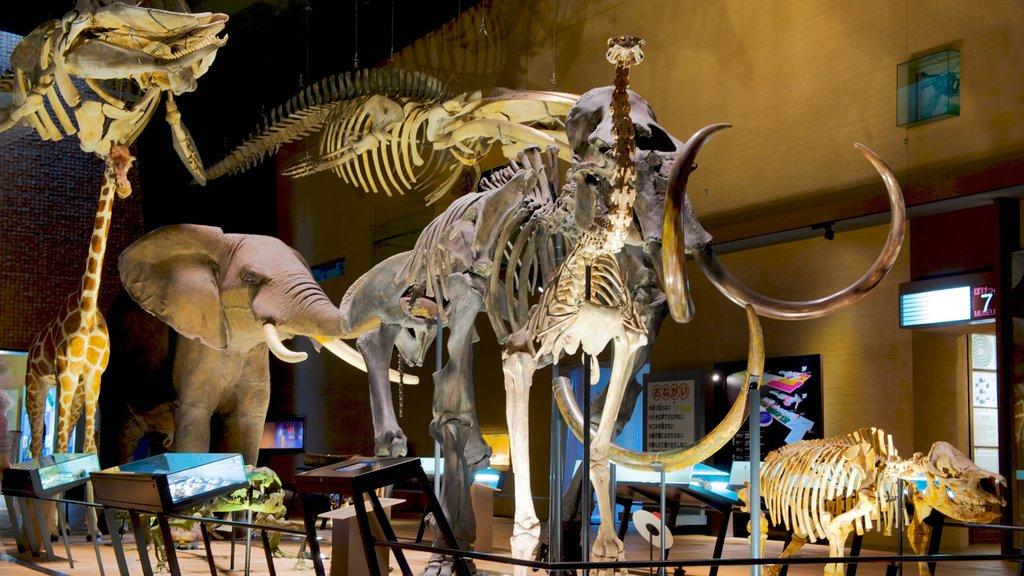 Museo de Historia Natural y Humana mostrando vistas interiores