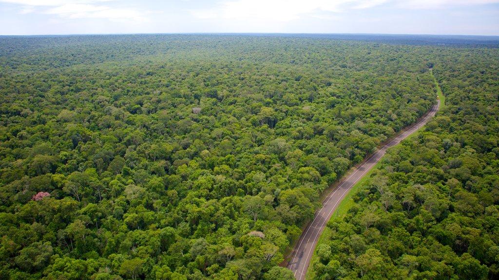 Foz do Iguaçu mostrando cenas de floresta e paisagem