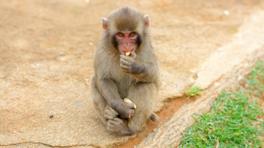 Arashiyama Monkey Park which includes a park and animals