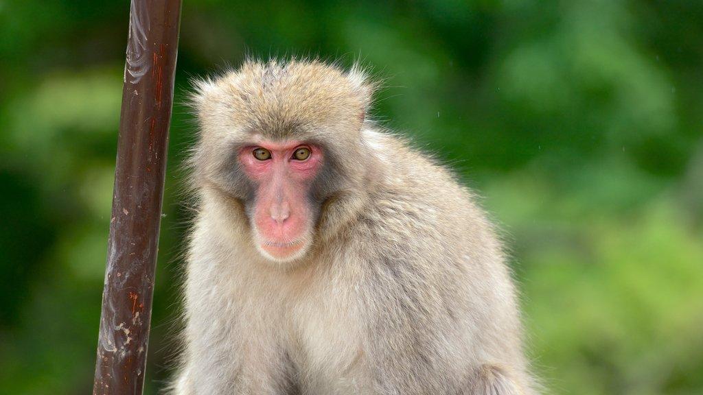 Arashiyama Monkey Park showing zoo animals and animals