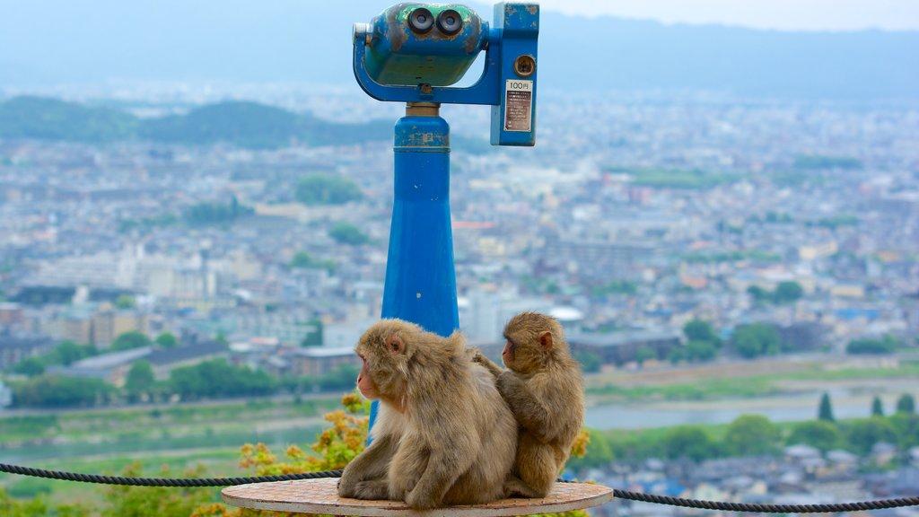 Arashiyama Monkey Park showing landscape views, cuddly or friendly animals and a city