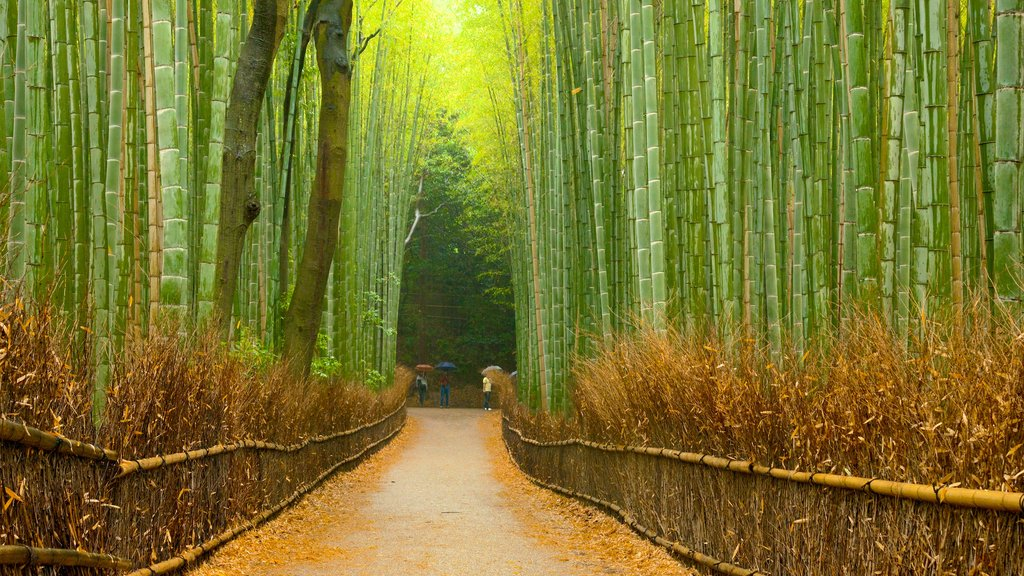 Kioto ofreciendo vistas de paisajes y bosques