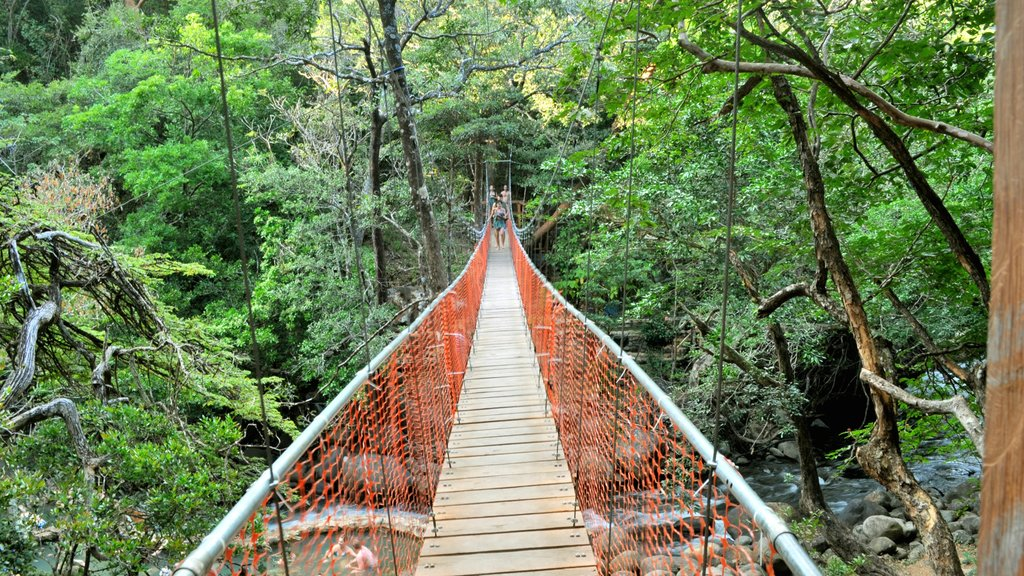 Guanacaste - North Pacific Coast featuring forests, landscape views and a suspension bridge or treetop walkway