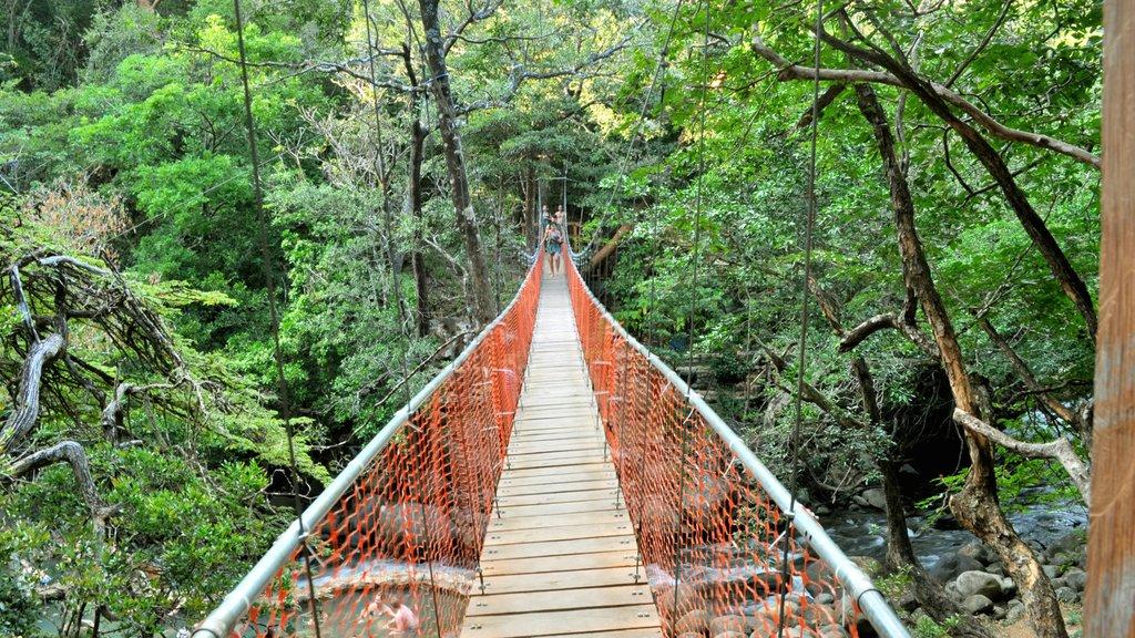 Guanacaste - Costa del Pacífico norte que incluye un puente colgante o pasarela en las copas de los árboles, vistas de paisajes y escenas forestales