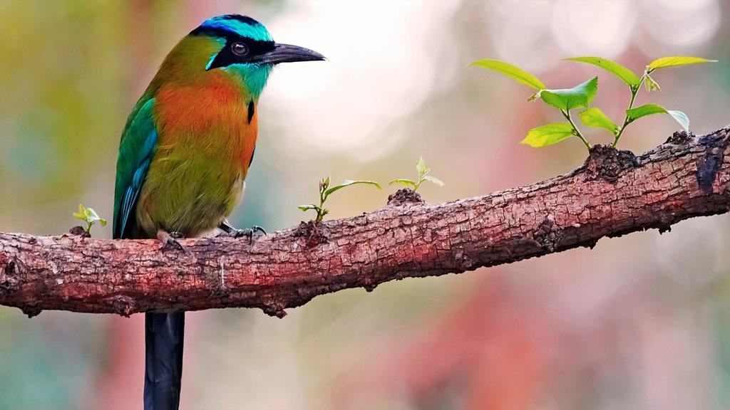 Managua showing bird life
