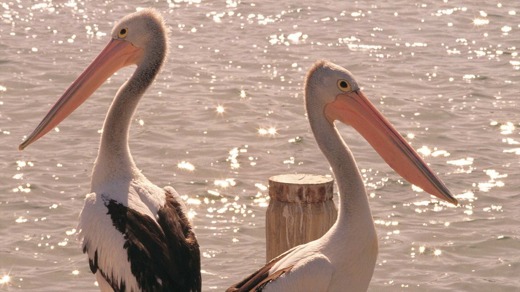 Mandurah showing bird life