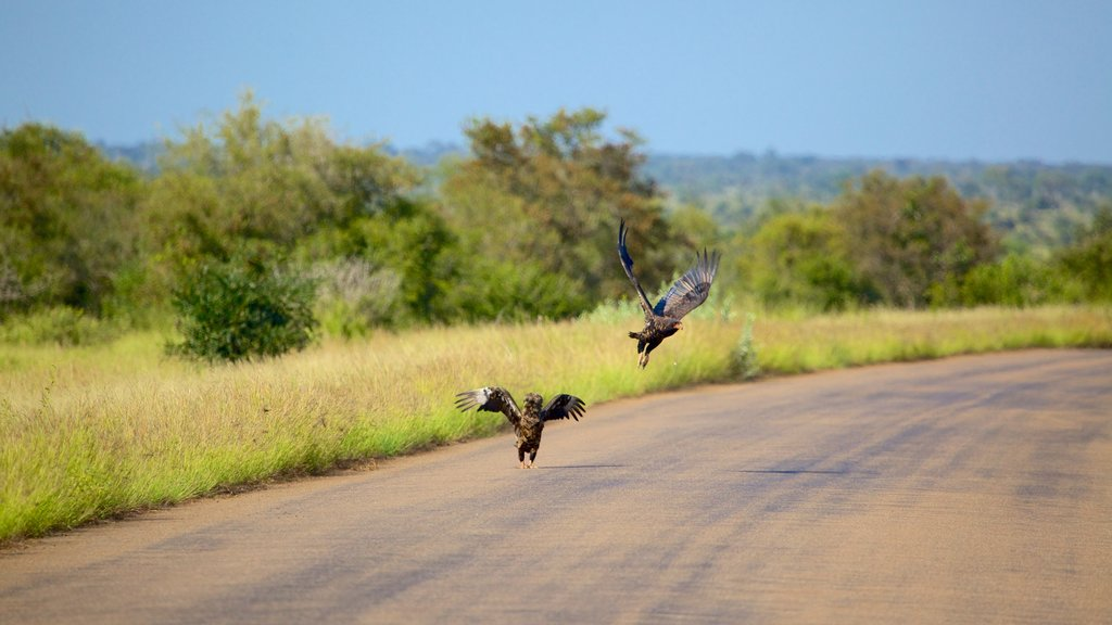 Kruger National Park which includes tranquil scenes, landscape views and bird life