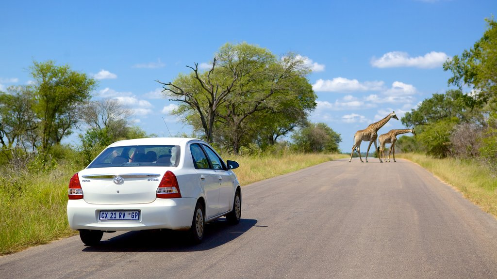 Kruger National Park which includes touring, safari adventures and land animals