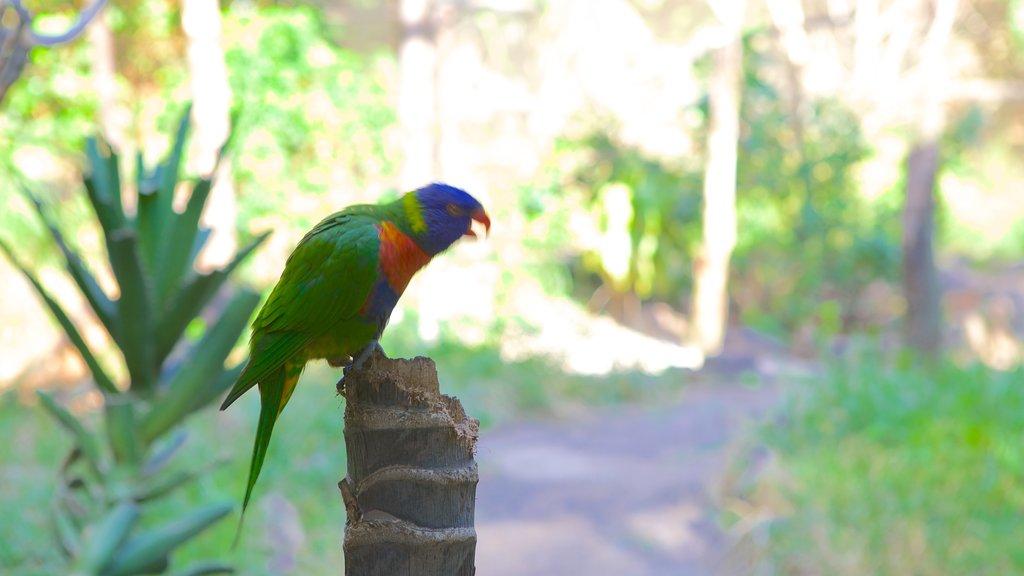 Umgeni River Bird Park featuring bird life