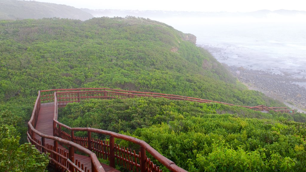 Nahoon Beach which includes landscape views, forests and general coastal views