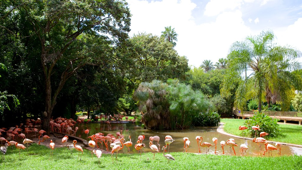National Zoological Gardens of South Africa which includes a garden, bird life and a pond