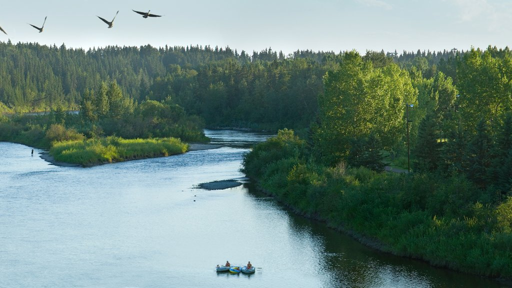 Red Deer featuring a lake or waterhole, landscape views and kayaking or canoeing