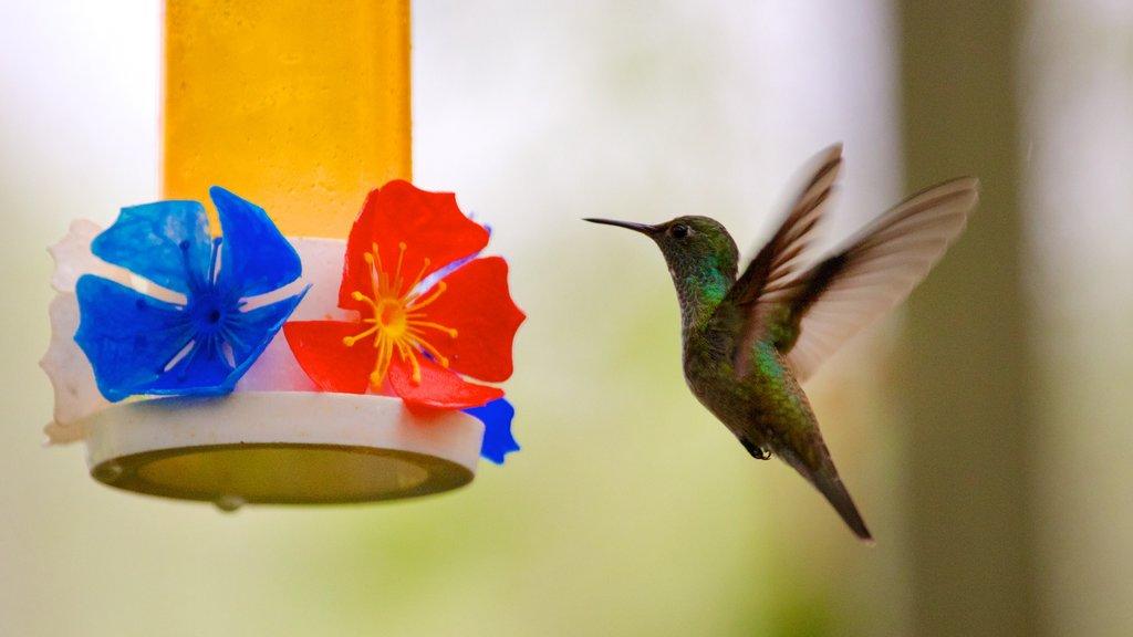 Foz do Iguaçu mostrando vida das aves e flores