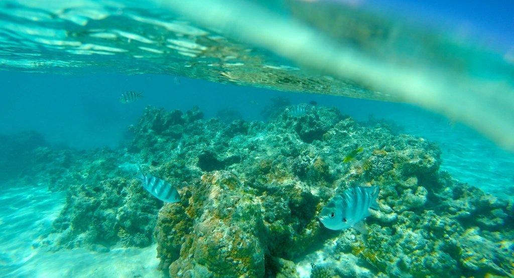 Aitutaki Under Water Tour