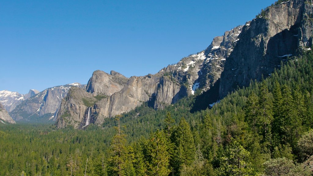 Yosemite Valley which includes forest scenes and mountains