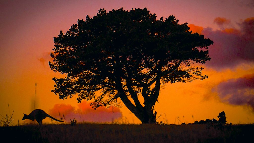 King Island showing a sunset and animals