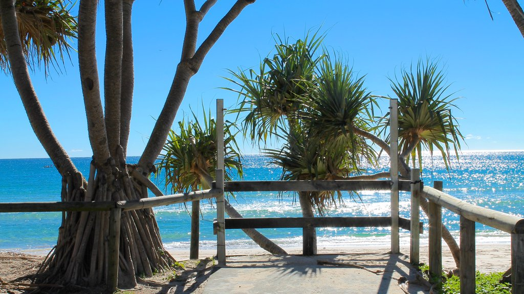 Kingscliff which includes tropical scenes