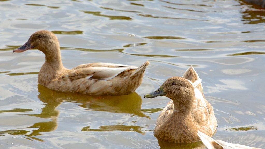 Richmond featuring bird life