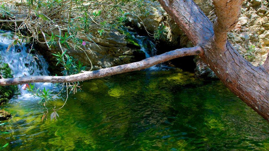 Siete Manantiales mostrando un estanque
