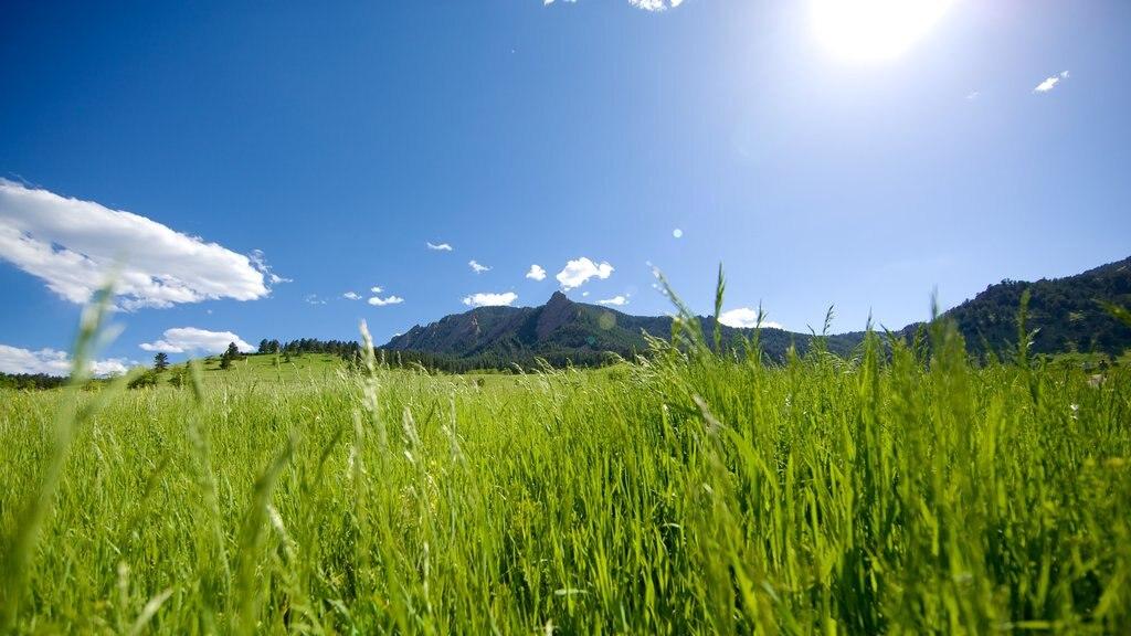 Chautauqua Park featuring tranquil scenes