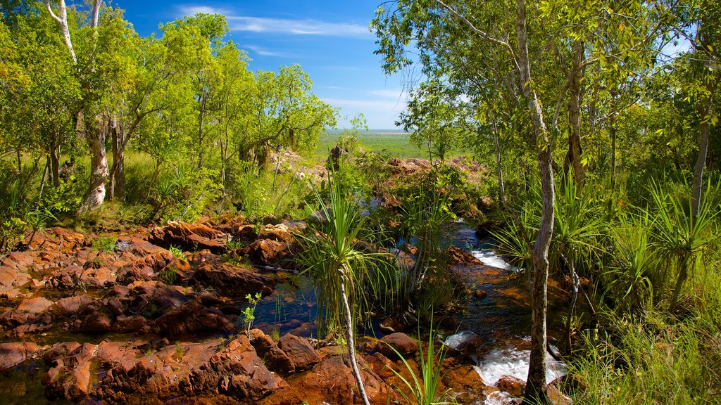 Litchfield National Park which includes a river or creek and landscape views