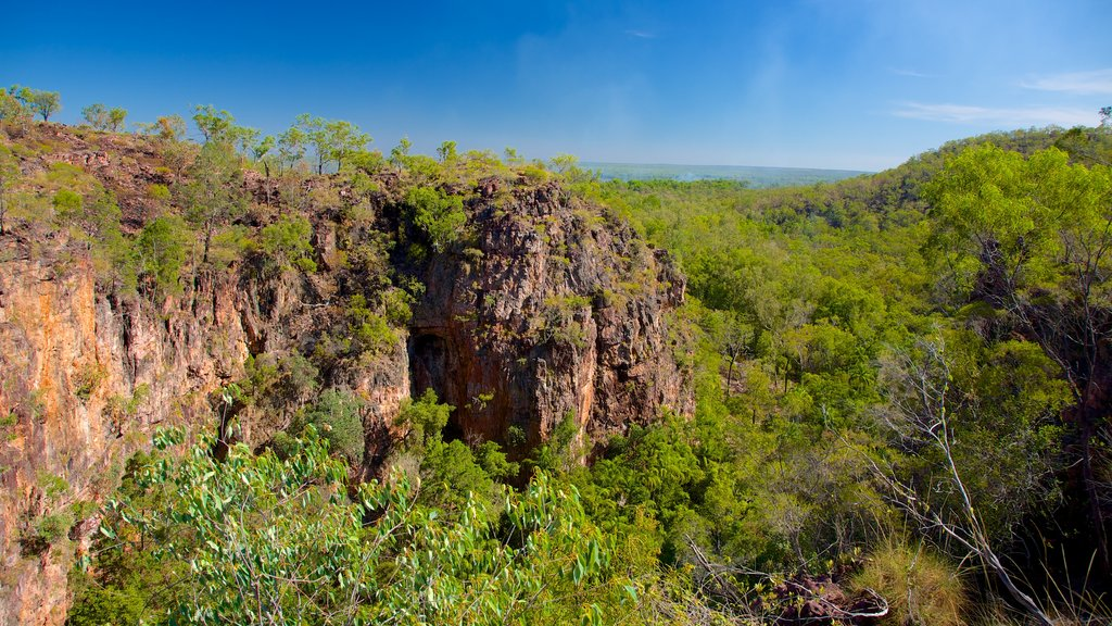 Litchfield National Park which includes landscape views and forests