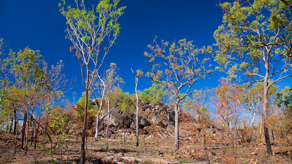 Litchfield National Park which includes landscape views and tranquil scenes
