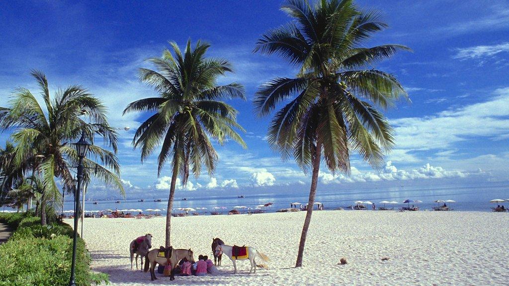 Prachuap Khiri Khan which includes tropical scenes and a beach