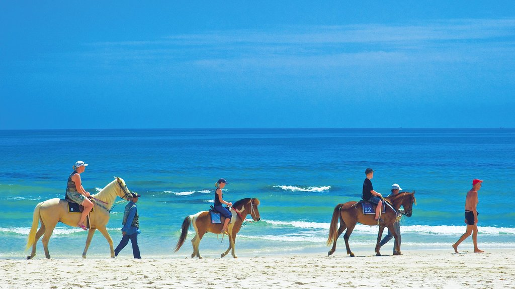 Prachuap Khiri Khan which includes horseriding, land animals and a beach