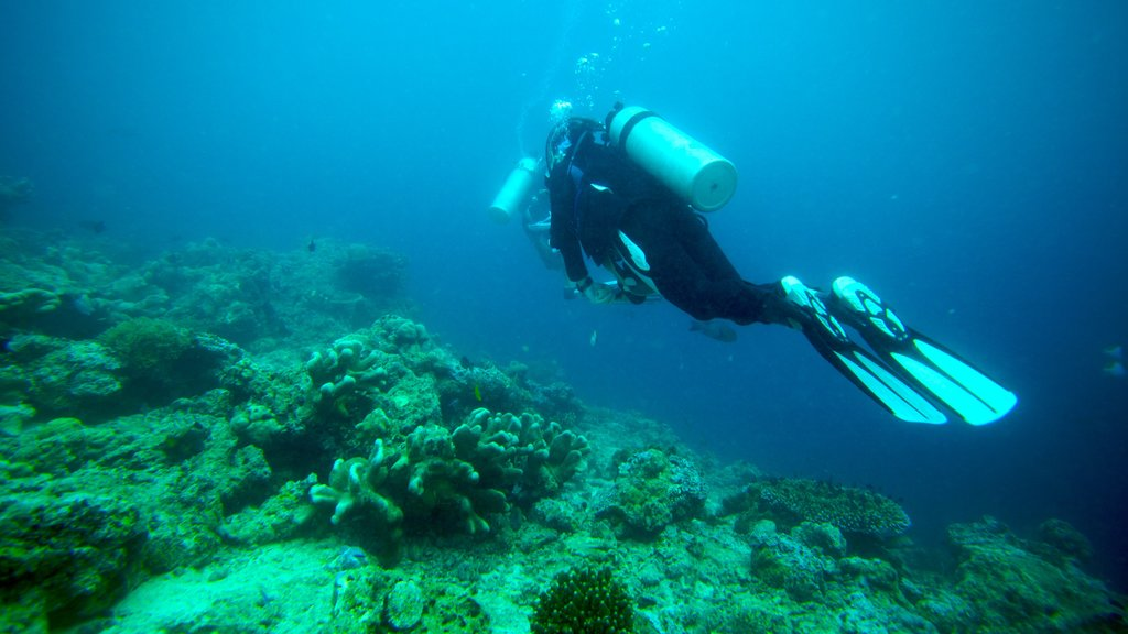Malaysia which includes colorful reefs and scuba