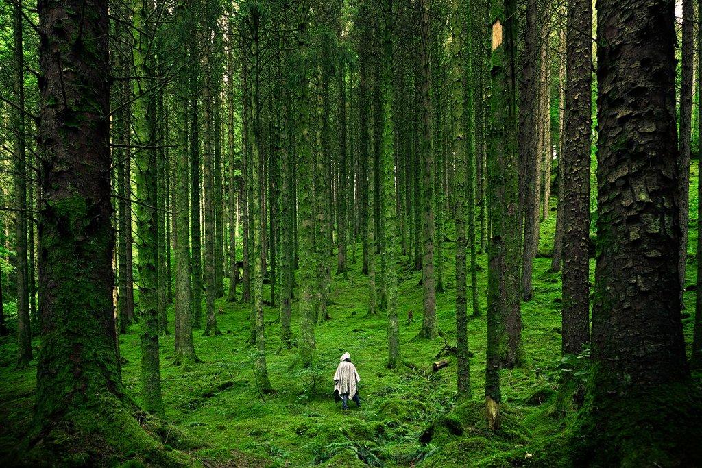 Forest around Inverness, UK