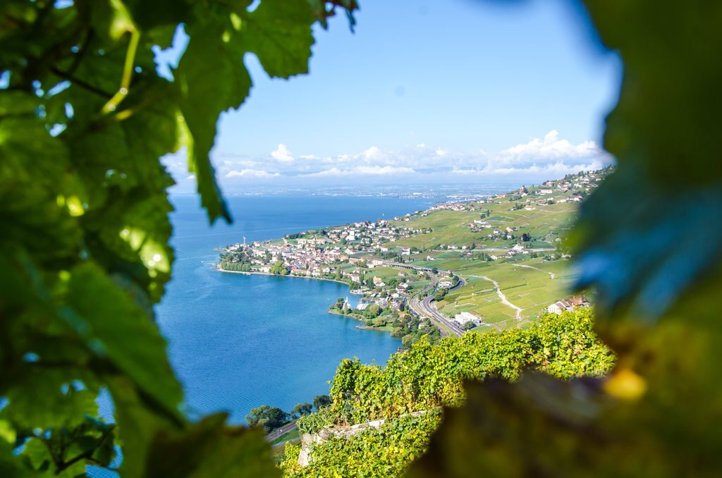 LittleCity.ch_Weinberge Lavaux