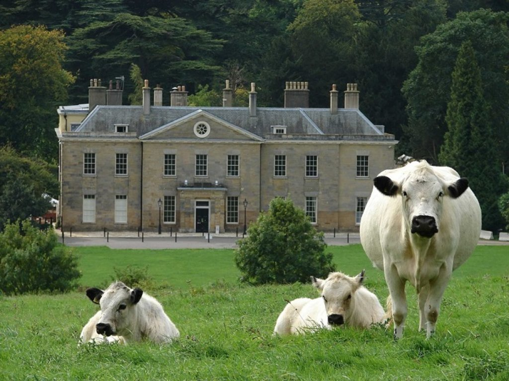 Image 3_Stanmer House_720
