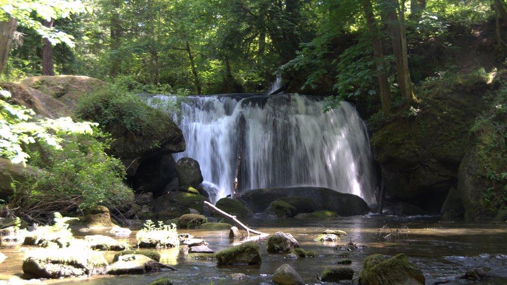 Bellingham featuring a cascade
