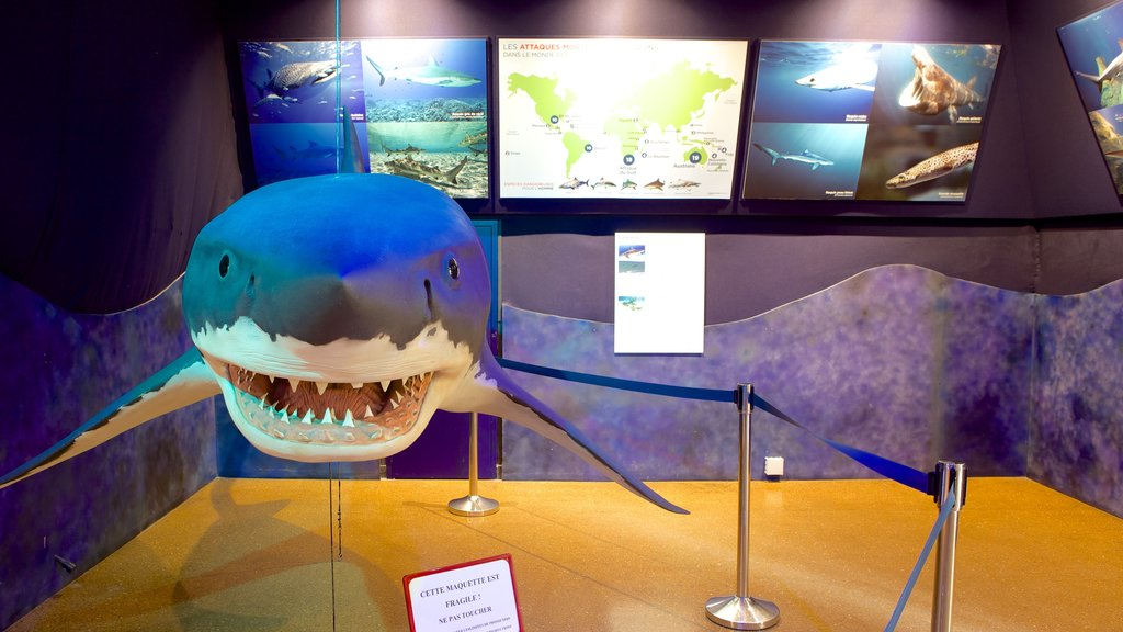 Sea Museum showing marine life