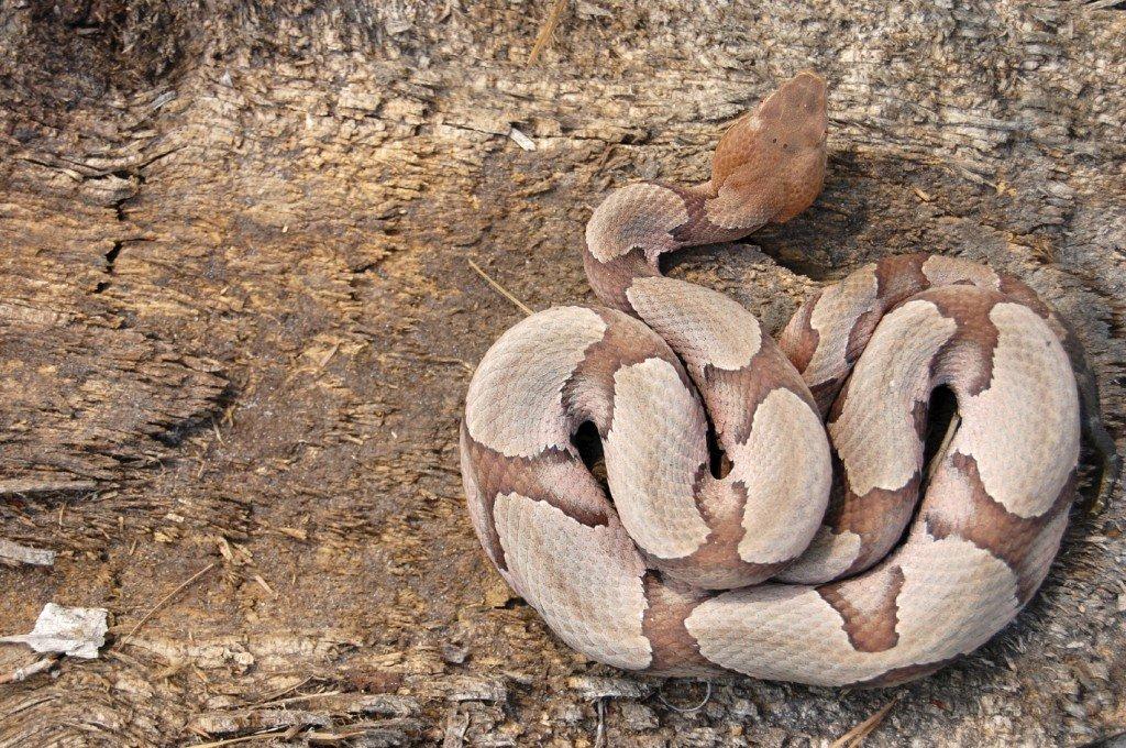 Hand Luggage Snake
