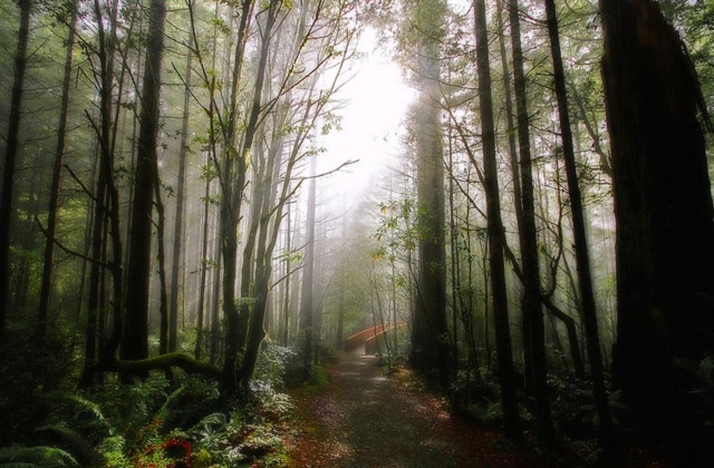 Redwood National Park, Star Wars