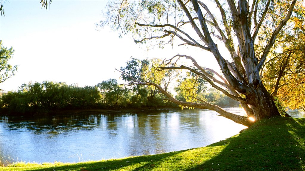 Albury showing a river or creek