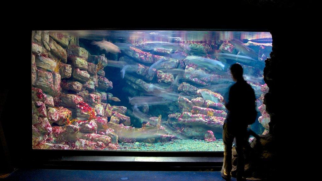 Mare Nostrum Aquarium featuring marine life and interior views