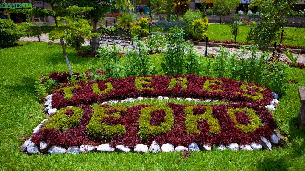 San Pedro La Laguna showing a park